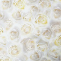 Motivkarton Weiße Rosen, 200 g/m², DIN A4, 5 Blatt